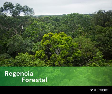 Regencia Forestal copia 1
