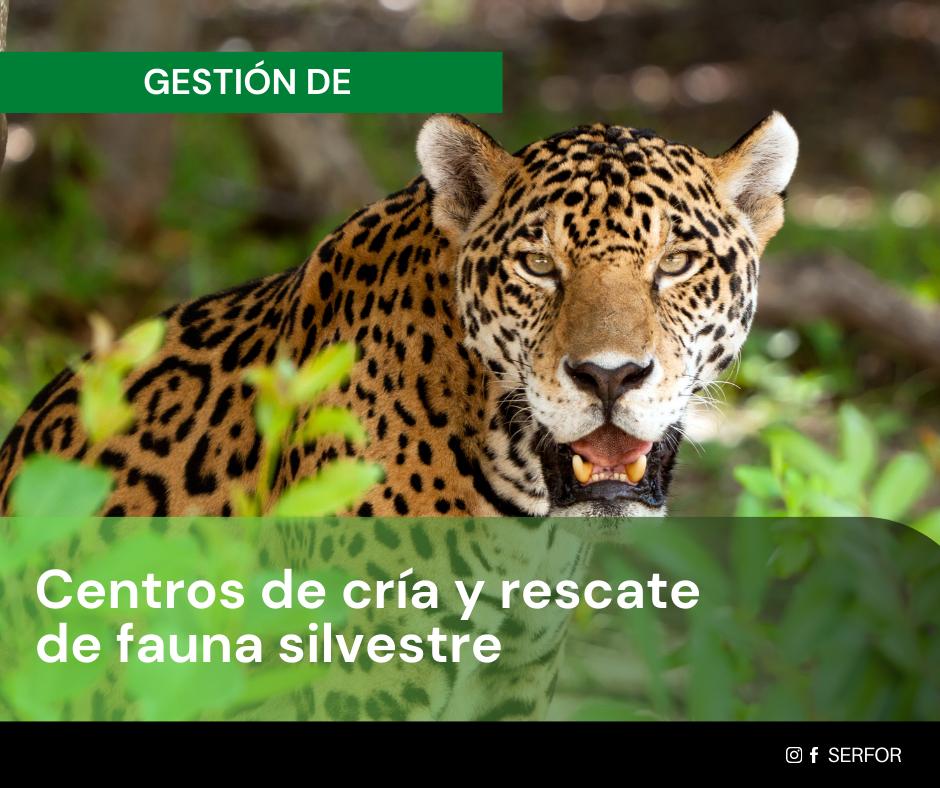 Gestión de los Centros de Cría y Rescate de Fauna Silvestre